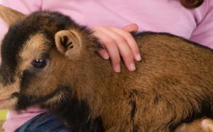 Consciences animales: Communiquer avec le vivant - Peggy Reboul
